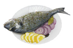 Sea grouper fish ( Dolphin ) prepared for roasting. The fresh sea grouper fish ( Dolphin, Dorado ) on a white ceramic plate with wavy edges. Fish is prepared for stock photos