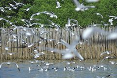 Sea gull 1 Royalty Free Stock Photography
