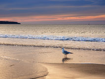 Sea gull. A sea gull on shore of the Baltic Sea royalty free stock photo