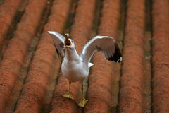 The sea gull Stock Photography