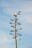 Sea Gull on Agave Flower Royalty Free Stock Photo