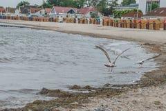 Free Sea Gull At Beach In Kellenhusen, Germany Stock Photos - 98562353