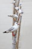 Sea gull on bamboo pole Royalty Free Stock Photo