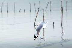 Sea gull. At bangpu, Thailand Stock Photography