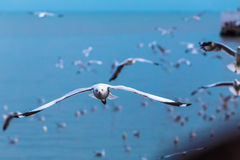Sea gull. At bangpu, Thailand Stock Photos