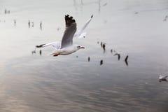 Sea gull. At bangpu, Thailand Stock Images