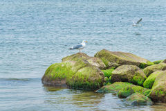 Sea gull at the beach Royalty Free Stock Images