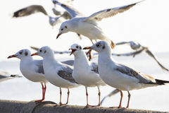 Sea gull birds standing on sea bridge Stock Photography