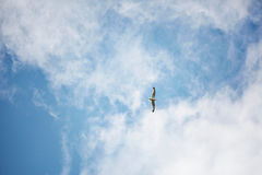Sea gull in blue sky Royalty Free Stock Photo