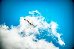 Sea gull in a blue sky Stock Image