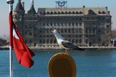 Sea Gull Crying in Istanbul, Turkey. Sea Gulls Cries on Ferry Boat, Istanbul, Turkey. Railway Station in background Stock Photos