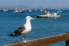 Sea gull at the dock Stock Photography