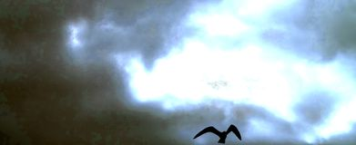 Sea gull in flight against a dark, foreboding sky, beware. Sinister black seagull soaring high, wings spread, in front of a frightening sky full of menacing royalty free stock photo