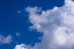 Sea gull and Glider, sky, clouds. Sea gull and paragliders in flight in the sky with clouds Stock Images