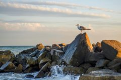 Sea Gull Is Standing On A Stone In The Sea Stock Photo