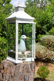 Sea Gull in a lantern Stock Images