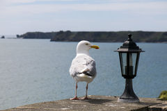 Sea gull looking at lantern on coastal wall Stock Photography
