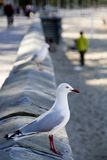 Sea gull ocean view Stock Photos