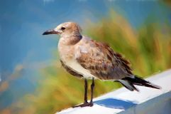 Sea Gull Painting Royalty Free Stock Photography