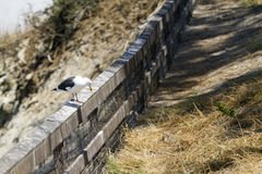 Sea Gull Perched on a Fence at the Coast Stock Images