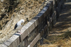 Sea Gull Perched on a Fence at the Coast Royalty Free Stock Photos