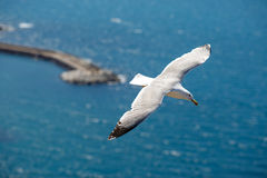 Sea gull at port of Castelsardo, Sardinia, Italy Royalty Free Stock Photo
