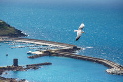 Sea gull at port of Castelsardo, Sardinia, Italy Stock Image