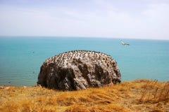 Sea-gull in Qinghai Lake Royalty Free Stock Photos