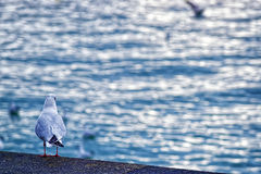 Sea gull on the quay Royalty Free Stock Photography