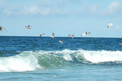 Sea gull queue. Not a straight line Stock Images