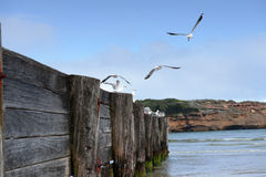 Sea-gull rest on a fence Royalty Free Stock Photos
