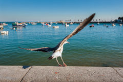 Sea Gull. On the rise in the fishing port royalty free stock photography