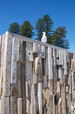 Sea Gull on Rustic Wooden Sculpture Stock Images