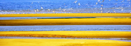 Sea gull and sand beach. In seashore Royalty Free Stock Images