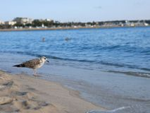 Sea gull sand between your toes royalty free stock image