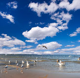 Sea gull on the sea, blue cloudy sky. Royalty Free Stock Images