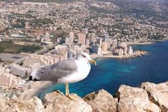 The sea gull sits on the rocks on the mountain against the backdrop of the city and the sea below. The sea gull sits on the rocks on the mountain against the stock photos