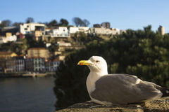 Sea gull sitting on the coast in the port city. Nature. Stock Images