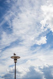Sea gull sitting on a lamp post in front of cloudy sky Royalty Free Stock Photography