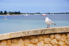 Sea gull sitting on a wall Stock Photos