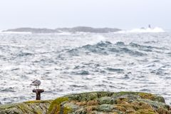 A sea gull standing calmly on a pole on a small island. royalty free stock images