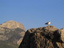 Sea gull on stone Stock Photo
