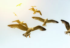 Sea Gull in the sunlight Stock Images
