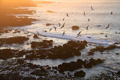 Sea-gull in sunset Stock Image