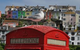 Sea Gull on a telephone booth Stock Image