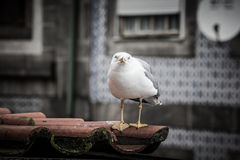 Sea gull on a tiled roof Stock Image