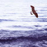 Sea gull under the sea. Sea gull flying over the sea, and rises up. Great photo for square cover design Royalty Free Stock Photos