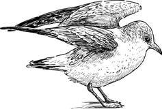Sea gull Royalty Free Stock Photos