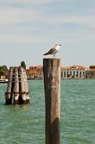 Sea gull in Venice. On a beam Royalty Free Stock Photography