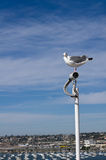 Sea gull watching a surveillance camera Stock Photography